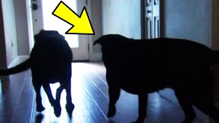 Old Woman Was About To Lose Her Life, Then Her Two Giant Dogs Did Something Unbelievable Saving Her