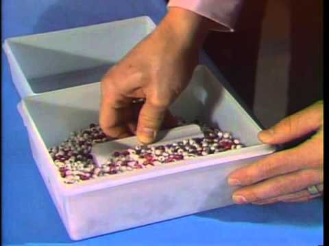Deming on Management: The Red Bead Experiment