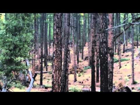 Coyote Hunting Northern Arizona