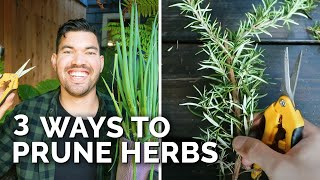 3 Methods For Pruning Herbs To Stimulate New Growth