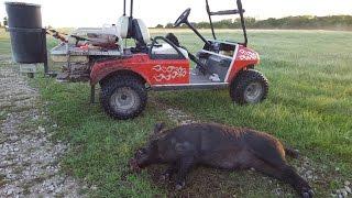 Robertson County Texas Hog Hunting