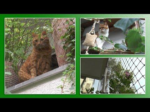 Katzengerechter Balkon | TierheimTV informiert