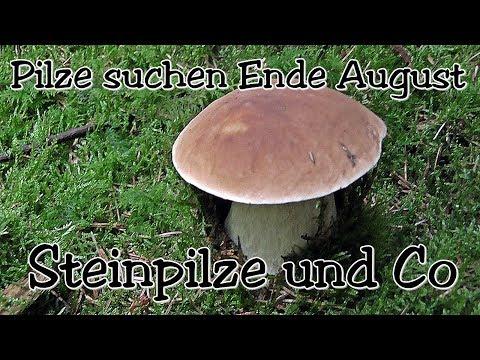 Steinpilze und Co - Pilze suchen Ende August 2017