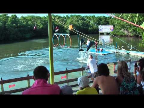 "In dolphinarium ""Delfinario"" in Varadero (Cuba) you can swim with dolphins"