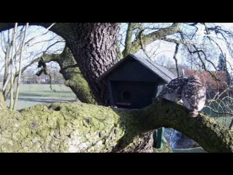 Little Owls Family 2: Being Cosy Outside - 16.03.17