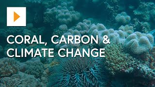 The Great Barrier Reef: Coral, Carbon & Climate Change
