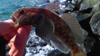 Зимняя рыбалка с берега на черном море