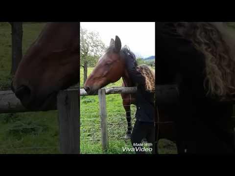 Unser Pferd liebt es so gekrault zu werden