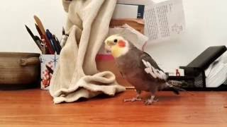 Bird Sings Popular Theme Song