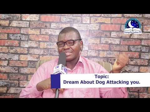 DREAM ABOUT DOG ATTACKING ME I EvangelistJoshua.com I