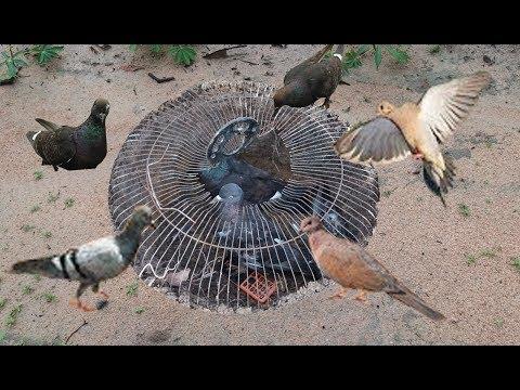bí kip bắt chim hiệu quả! đã ai làm kiểu này chưa ạ?
