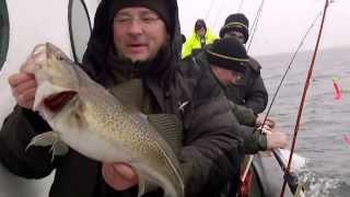 На что ловят треску в балтийском море