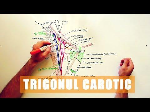 Cum se tratează artroza articulației cotului