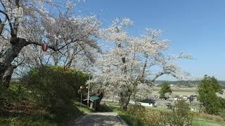 mqdefault - 紫館公園をぶらり桜見物(一関市花泉町)2019.4.22