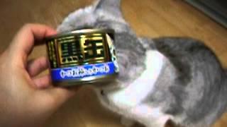 猫缶に頬ずり♪