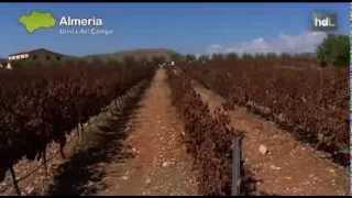 preview picture of video 'HDL Comienza la vendimia en la única bodega que produce vino en pleno desierto'