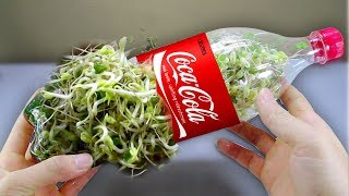 using-a-coca-cola-bottle-to-grow-bean-sprouts-at-home-amazing-life-hack
