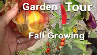 Garden Tour Growing Ground & Container Gardening Tons of Food Easy Peppers Tomatoes Cucumbers Herbs