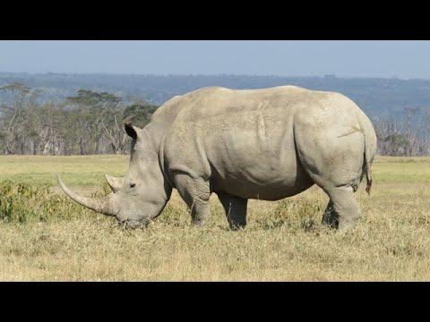 White-Rhinoceros in Lake Nakuru National Park