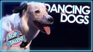 DANCING DOG Auditions From Britain