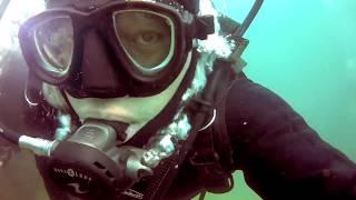 Подводный мир Черного моря / The underwater world of the Black Sea
