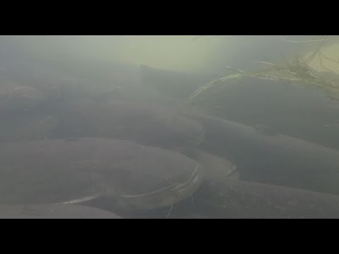 Mallefiskeri i Frankrig