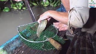 82 | Cắm Câu Mồi Dế Cá Lôi Gục Cần P1 | Fishing