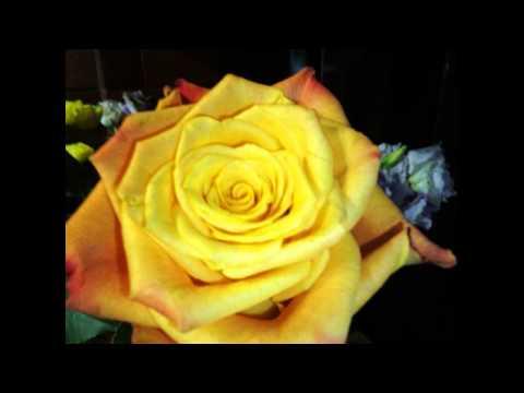Женское мужское счастье цветок