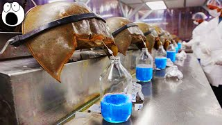 Top 10 Most Expensive Liquids In The World