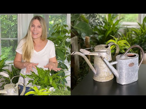 Gardening Tips - How Much Should You Water Houseplants?