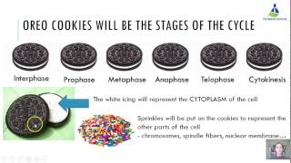 oreo cell cycle assignment