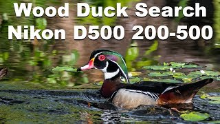 Searching for Wood Ducks with the Nikon D500 and the Nikkor 200-500mm Lens