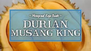 Mengenal Durian Musang King, Varian Durian Terbaik di Dunia dengan Warna Kunyitnya