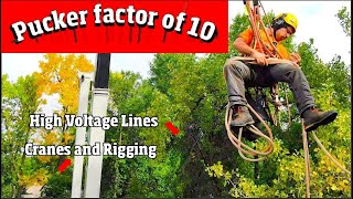 The Most dangerous Tree job I've seen. 4k video
