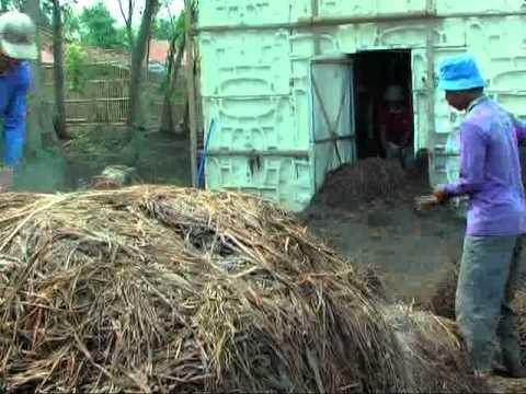 Video Budidaya Jamur Merang