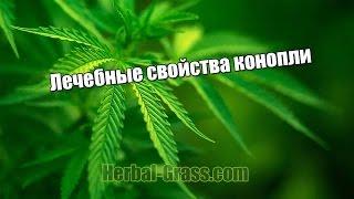 Лечение семенами травой конопли