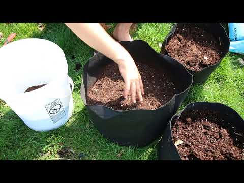 , title : 'How to grow Potatoes In Containers - Complete Growing Guide