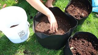 How to grow Potatoes In Containers - Complete Growing Guide