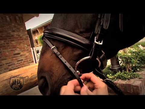 Loesdau Lessons: Basics mit Kati: Trense ans Pferd anpassen