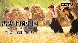舌尖上的中国(粤语版)第7集:我们的田野