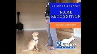 Teach your puppy its name in just 60 seconds!