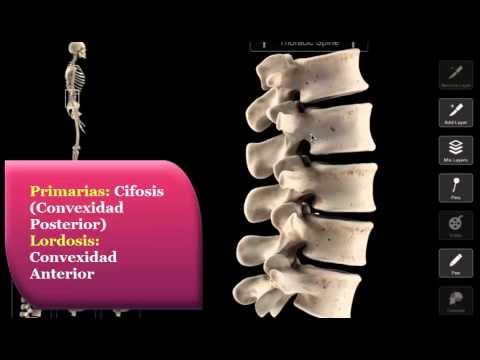 Tratamiento ortopédico con displasia de la cadera