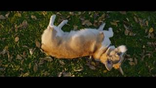 Trailer of Mes vies de chien (2017)