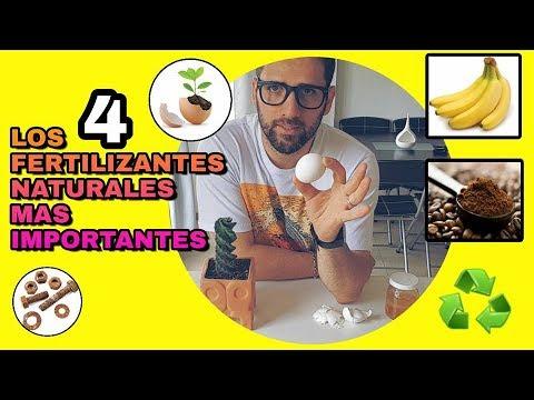 4 FERTILIZANTES NATURALES PARA CACTUS SUCULENTAS Y TODO TIPO DE PLANTAS