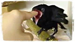 ПРИКОЛЫ С ЖИВОТНЫМИ (смешные птицы)   FUN WITH ANIMALS (funny birds) #379