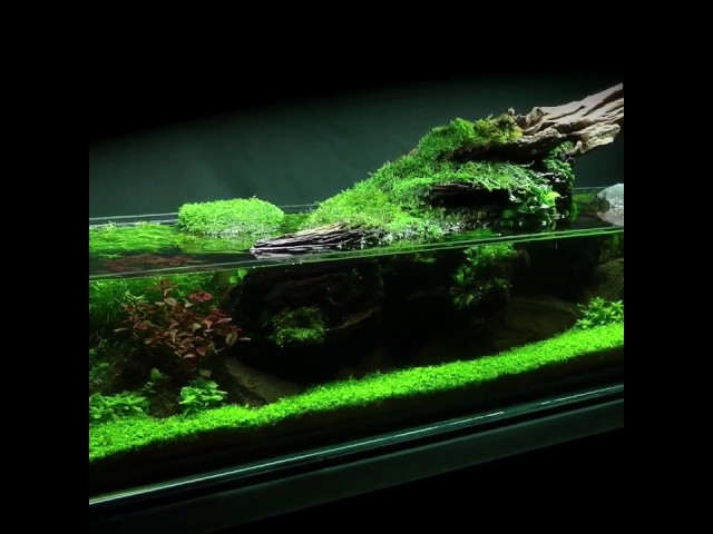 Simplicity Aquascape Preview (full video coming soon!)