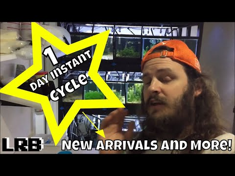 1 Day Instant Cycle Aquarium Quarantine Process for New Fish and More!