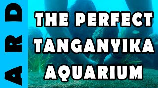 Setting up the Perfect Tanganyika Aquarium
