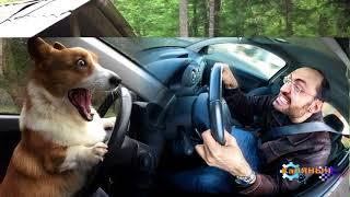 Как я учился водить машину