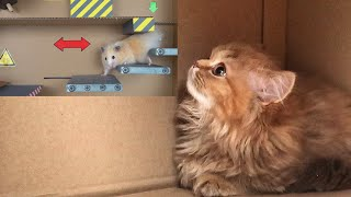AWESOME HAMSTER MAZE with TRAPS-Reaction of the red kitten